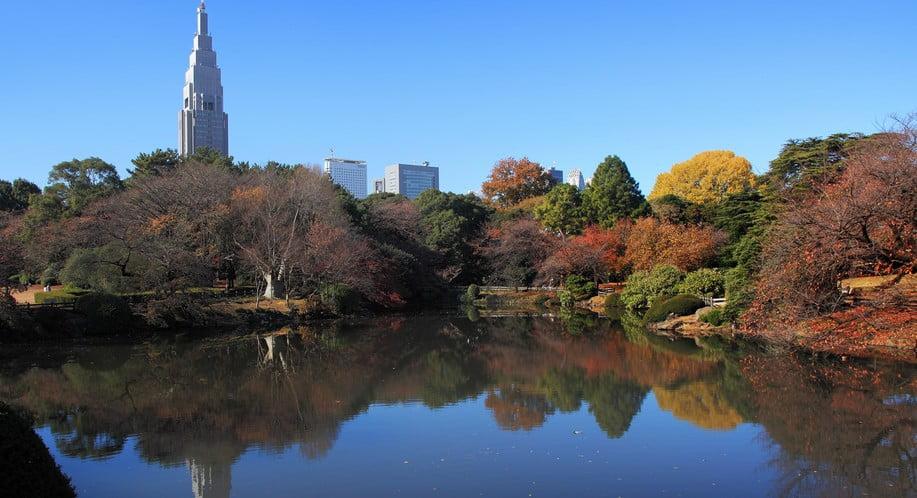 実は、この明治神宮・外苑のイチョウの木は、驚くことに、超!都会である新宿区の「ある場所」で育てられました。